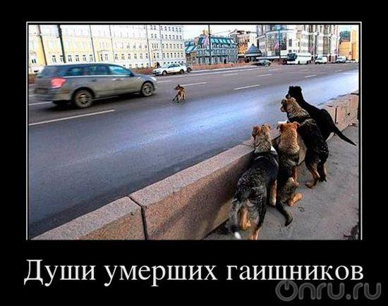 Демотиваторы смешные новые про животных